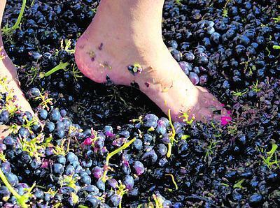 Grape_Stomp