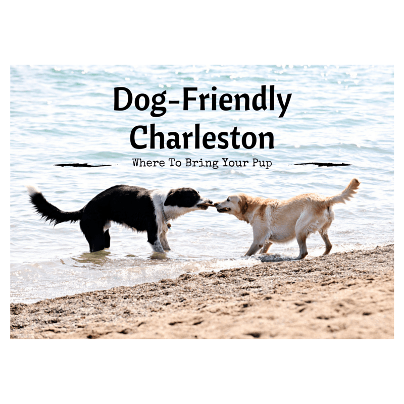 Dog-FriendlyCharleston(2)