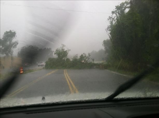 Tree down on Bees Ferry. Credit: @RayRiveraLive5