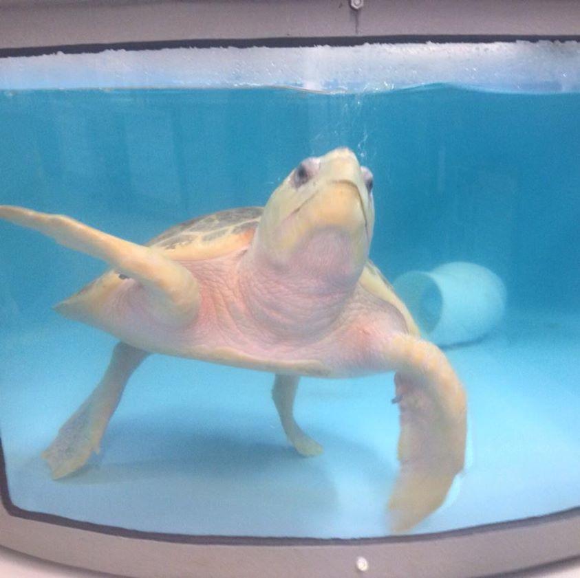 Credit: South Carolina Aquarium (Facebook)
