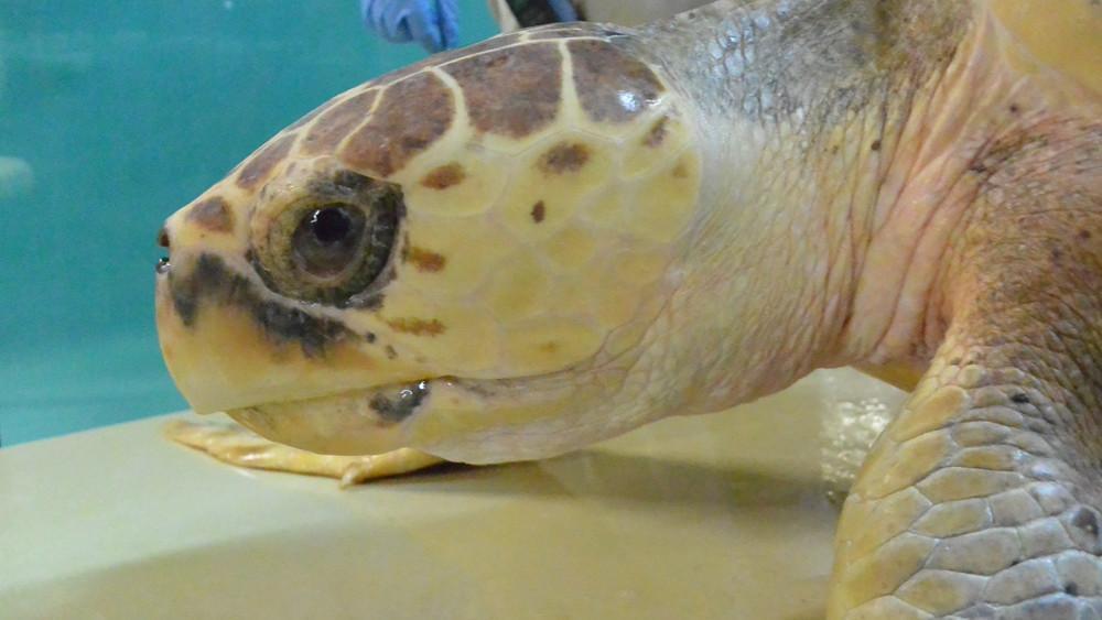 Credit: South Carolina Aquarium
