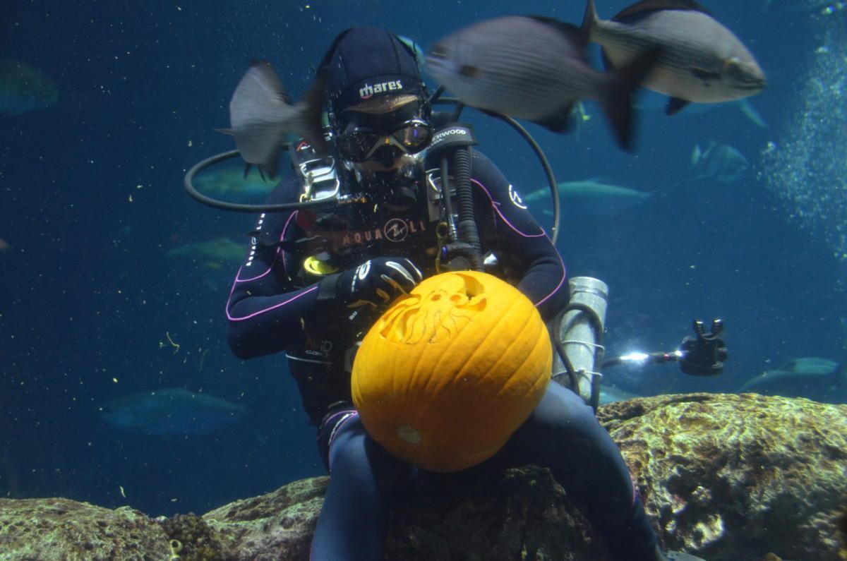 south-carolina-aquarium-underwater-pumpkin-carving-competition-october-2016-159